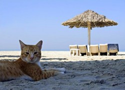 Taking your pet in and out of Turkey