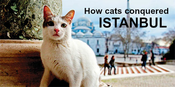 How cats conquered Istanbul