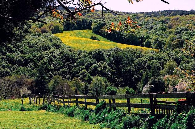 波兰人村:土耳其森林中的波兰珍宝