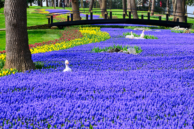 Istanbul in bloom: April is the month of tulips