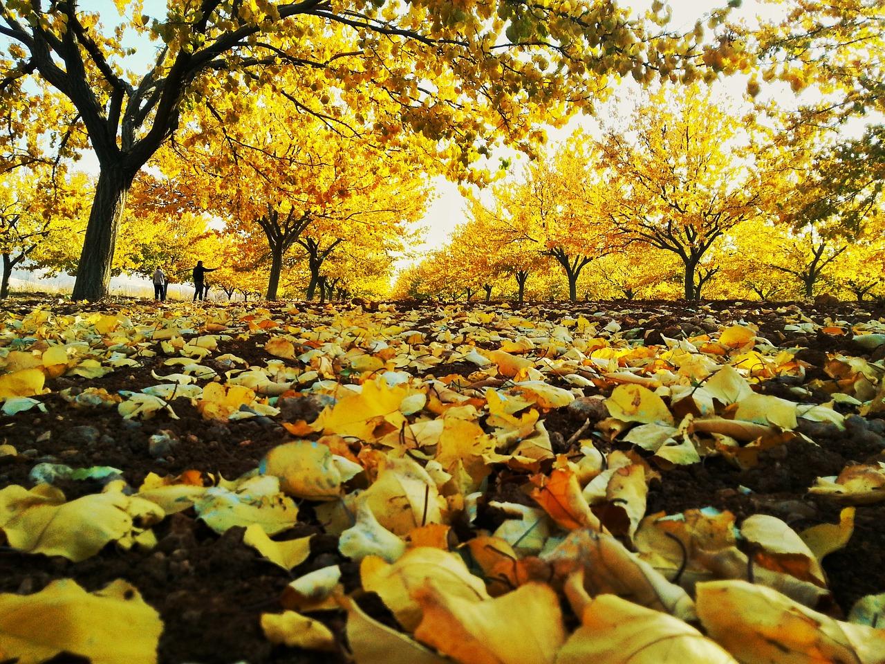 Where to enjoy Autumn in Turkey