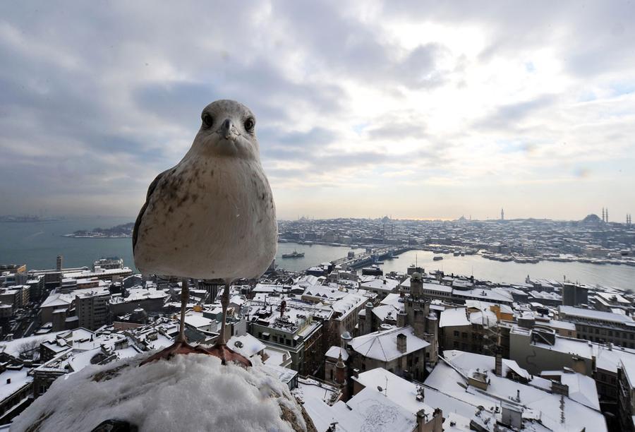 伊斯坦布尔的冬天