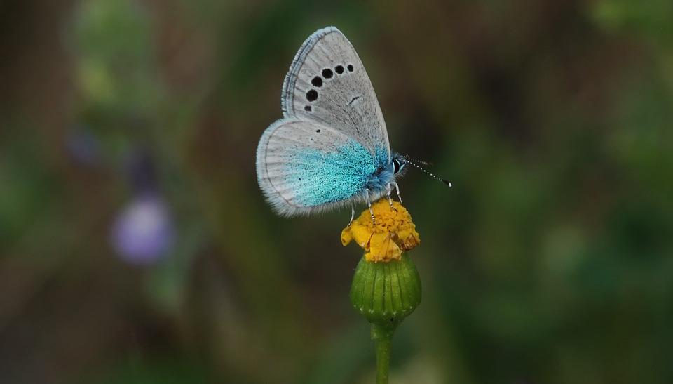 Butterflies in Turkey