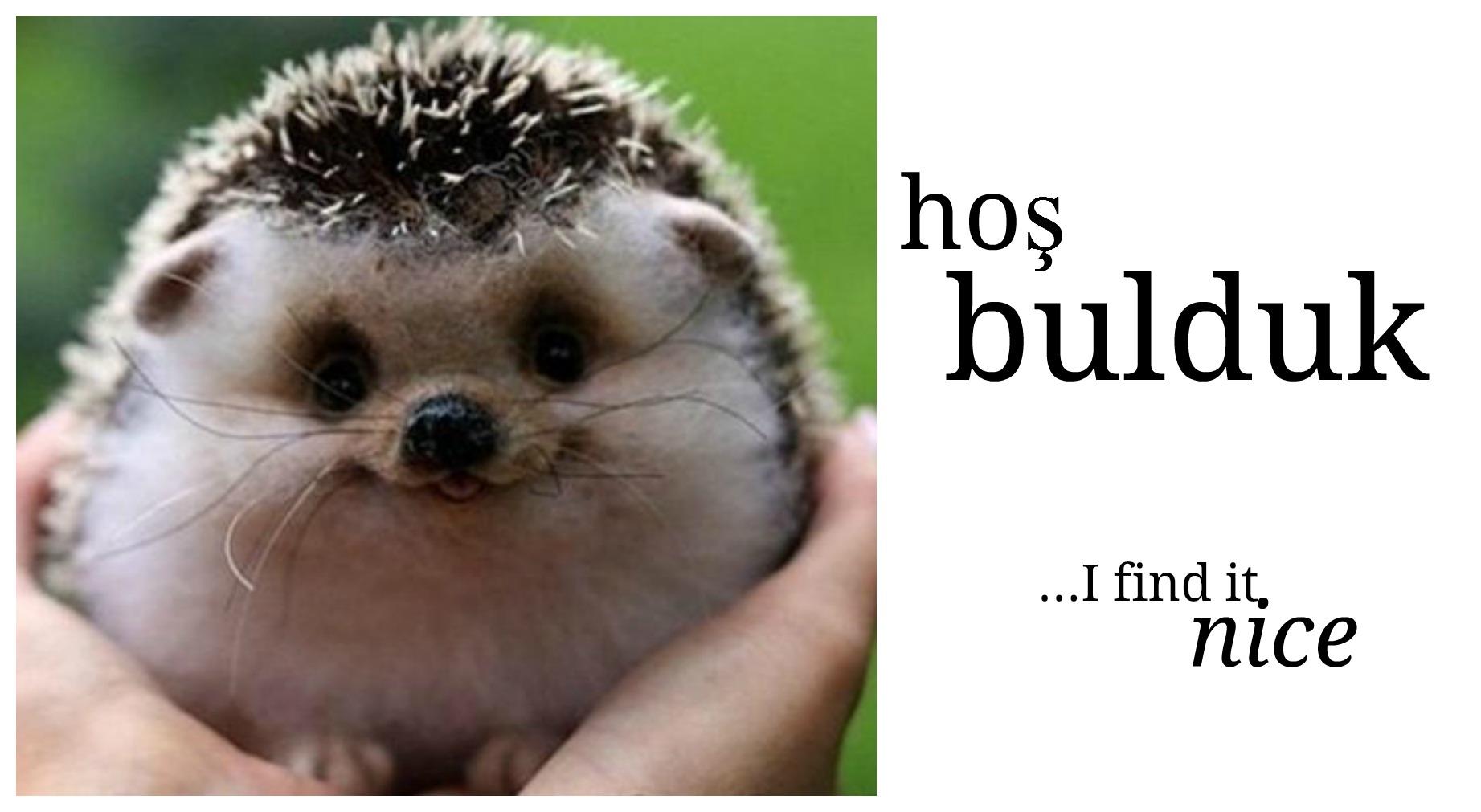 hos bulduk - Turkish language