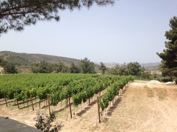 A vineyard for all seasons: visiting Bodrum's Mor Salkim