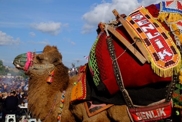 A resplendent camel.
