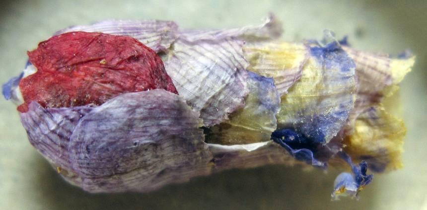 The sacks made by osmia avosetta.
