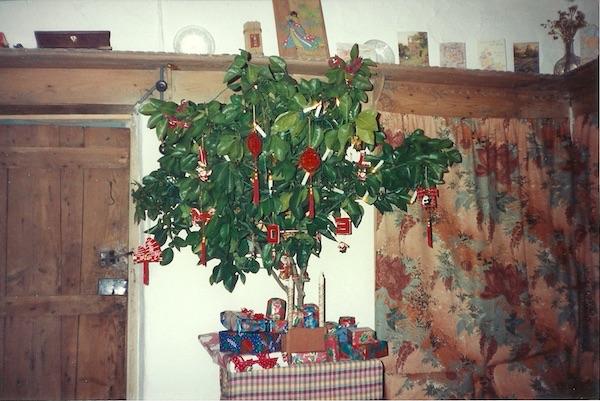 Marie's tangerine Christmas tree