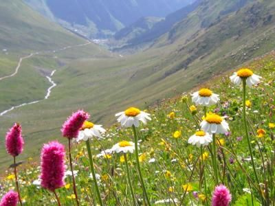 wildflowers in Turkey